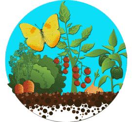 Garden-button