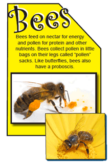 Beez-nectar