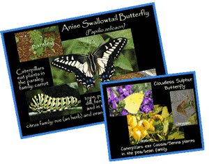 ButterflyInfoCards
