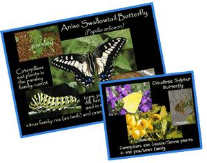 ButterflyInfoCards