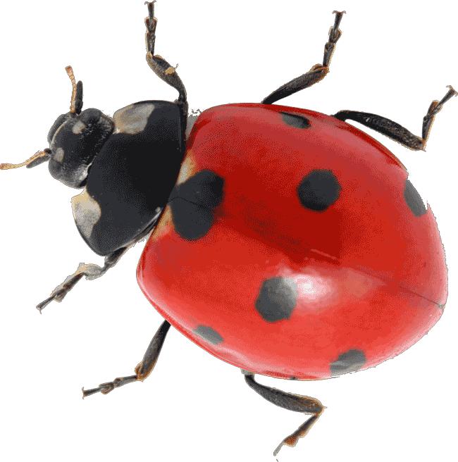 How To Make Ladybird Food