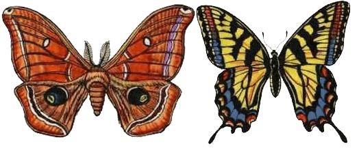 m-vs-b-imageRR