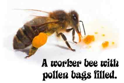 pollenbagsfilled